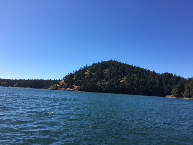 Flashbacks of Codzilla on a Deception Pass Boat Tour
