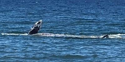 One Whale of aSunburn