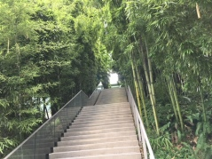 Walkway with stairs and bamboo. Photo by Cecilia Kennedy