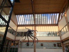 Giant squid sculpture hanging in the Pike's Market atrium. Photo by Cecilia Kennedy.