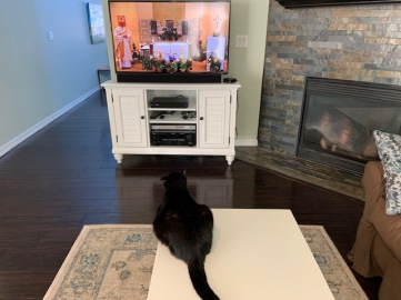 The cat joins us for televised mass.